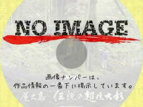 """捜索4年! 屋久島""""伝説の超巨大杉""""完全版 (2020)"""